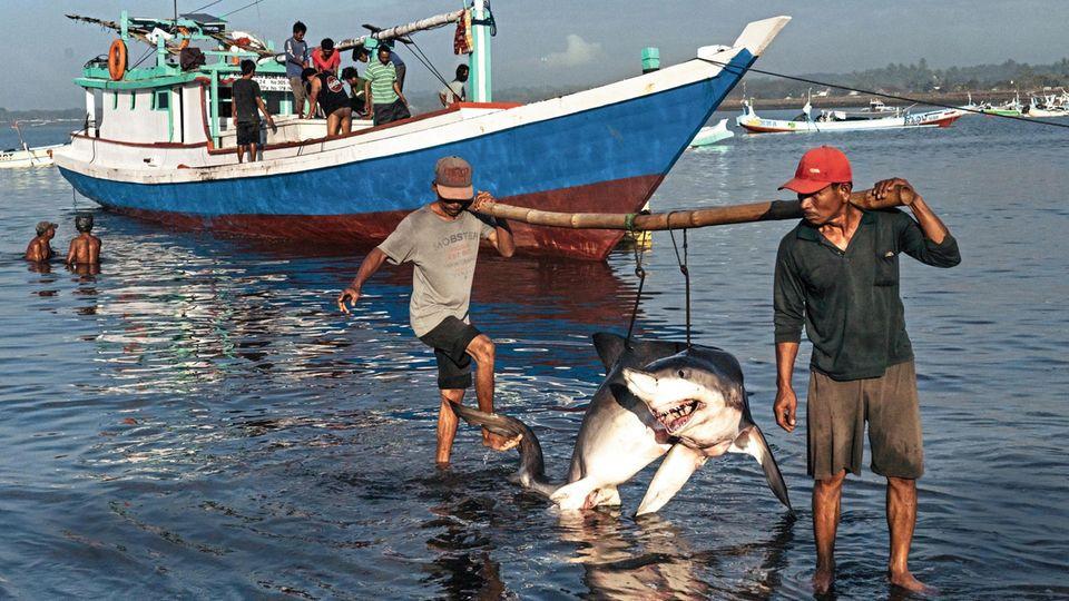 Zwei Männer tragen einen Hai