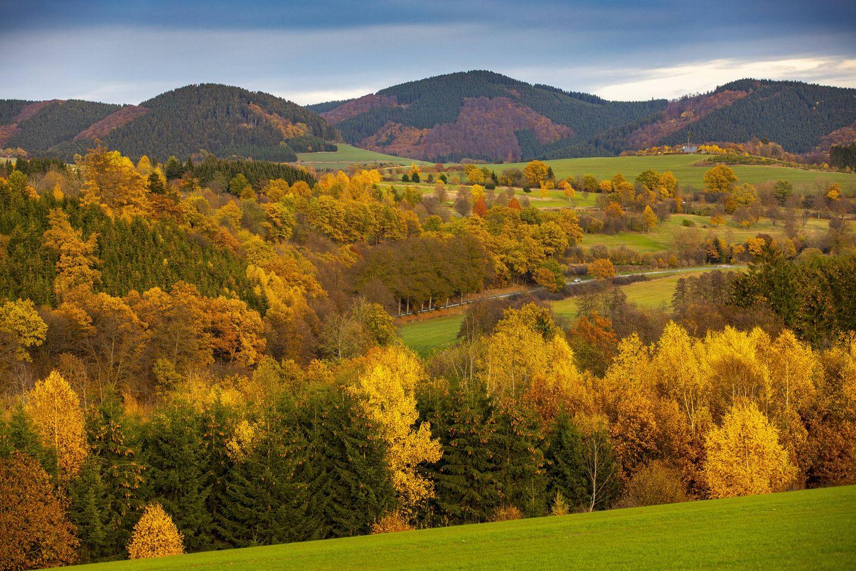 Auszeit in der Natur: Herbstlicher Wald im Sauerland inNordrhein-Westfalen