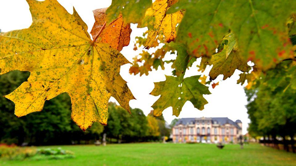 Herbstlich färbt sich das Laub der Bäume im Park von Schloss Molsdorf in Thüringen