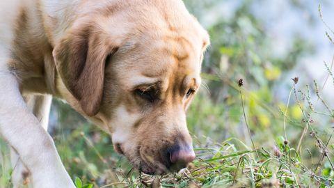 """Das Geheimnis hinter der kalten Nase: Können Hunde Wärme """"riechen""""?"""