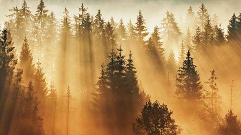 Ein Tagesanbruch mit solch einem Lichtspektakel ist auch im Bayerischen Wald ungewöhnlich