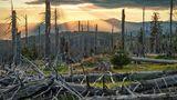 Der Borkenkiefer hat auch im Bayerischen Wald große Schäden angerichtet, wie am Großen Rachel mit dem 1456 Meter hohen Großen Arber im Hintergrund