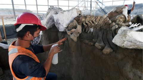 Ein Mexikaner mit rotem Arbeitshelm, Atemmaske und oranger Warnweste befeuchtet mit einer Sprühflasche Mammut-Knochen
