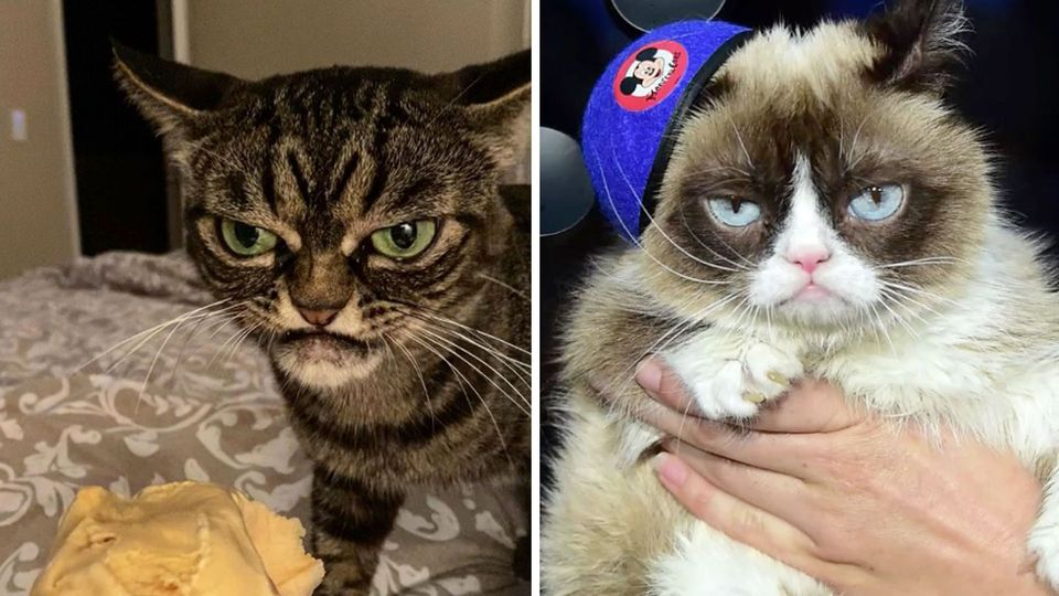 Neue Grumpy Cat
