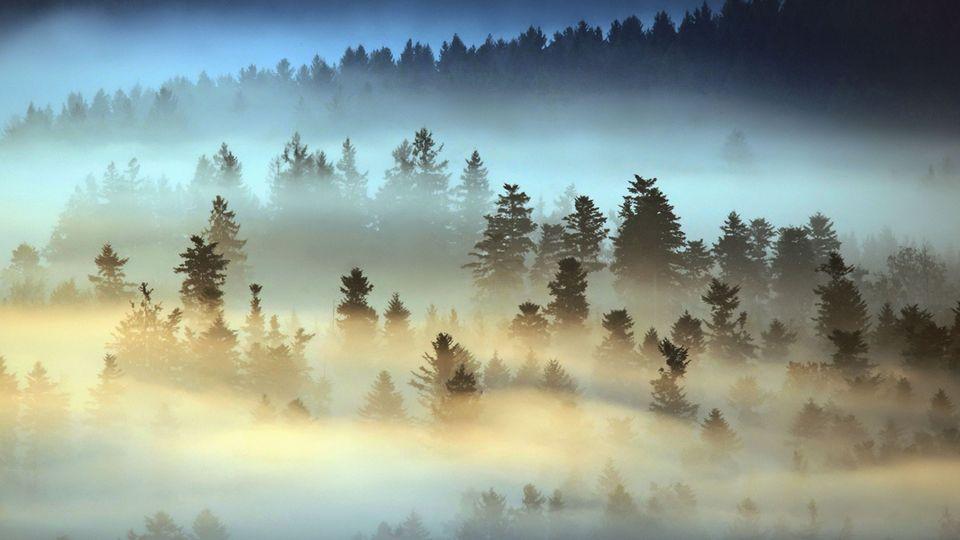 Im magischen Bayerischen Wald: Nebel wabert zwischen den Bäumen bei dieser besonderen Lichtstimmung