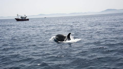 Aggressive Orcas in Spanien