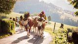 Schweiz:Angesichts steigender Fallzahlen hat die Schweiz ihre Einreise-Bestimmungen neu justiert. Nun müssen Einreisende aus weltweit 50 Ländern und Regionen in eine zehntägige Quarantäne. Dazu gehört seit Montag nun auch das österreichische Bundesland Wien. Mit einem negativen PCR-Test kann die Quarantänepflicht nicht aufgehoben werden. Wer aus Deutschland kommt, ist von den Einschränkungen bisher nicht betroffen.  Sollten die Fallzahlen weiter steigen, können darüber hinaus Menschen aus den Regionen entlang der Schweizer Grenze ausnahmsweise von der Quarantänepflicht ausgenommen werden. In der Schweiz selbst klettert die Zahl der Corona-Infektionen seit ein paar Wochen wieder. Immer mehr Städte führen eine Maskenpflicht ein.
