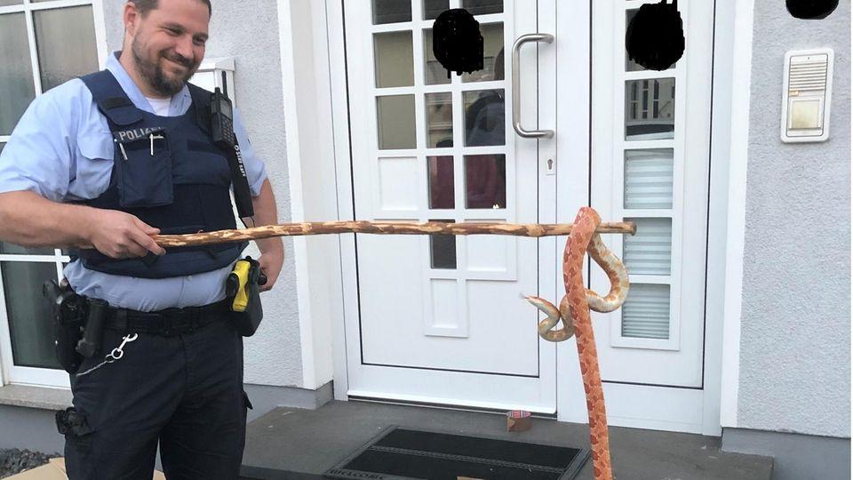 Nachrichten aus Deutschland – Schlange in Polch gefunden