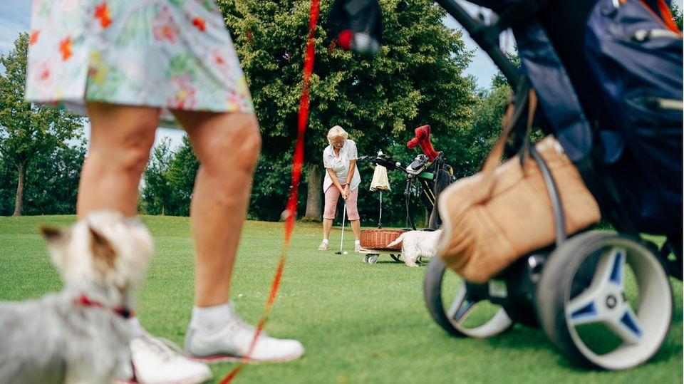 Immer mehr Golfplätze erlauben das Spielen mit Hundebegleitung