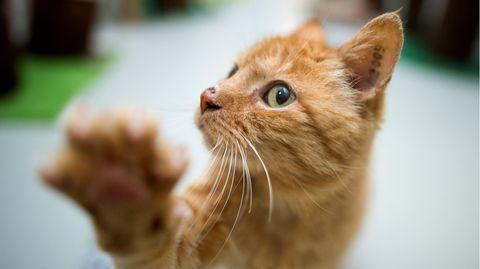 Eine Katze hebt ihre Tatze