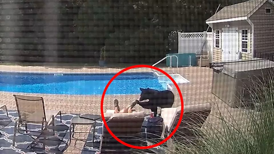 USA: Bär überrascht schlafenden Mann am Pool, der reagiert genau richtig