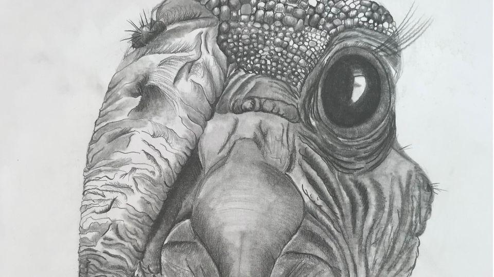"""Simone Mennes Zeichnung eines """"schrägen Vogels"""""""