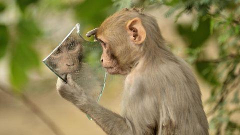 Tierrechte: Wenn Affen Selfies machen – über die Frage, wie viel Seele in Tieren steckt