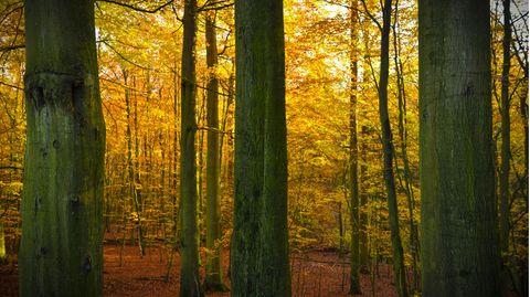 Die Blätter werden sich in den kommenden Wochen goldbraun färben, denn der goldene Herbst steht vor der Tür.