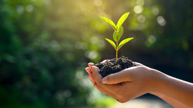 Hände halten Erde mit Sämling