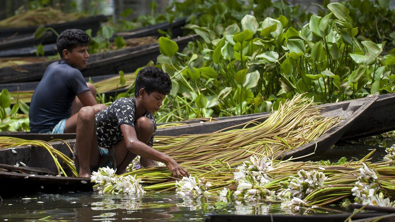 Kinder sortieren ihre Ernte