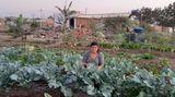 Das soll erst der Anfang sein: die erste Ernte der Frauenkooperative in der Favela Menino Chorão