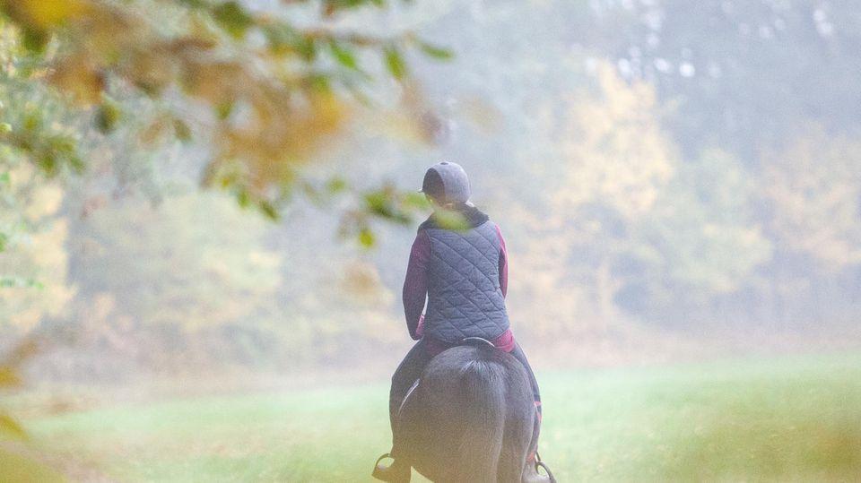 Nachrichten Deutschland - Pferd vs. Mann