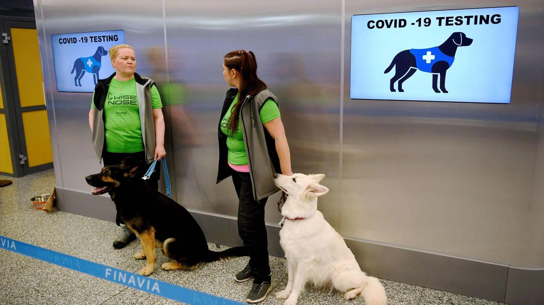 Am Helsinki Airport: Die trainierten Hunde sollen Reisende mit Covid-19 erschnüffeln