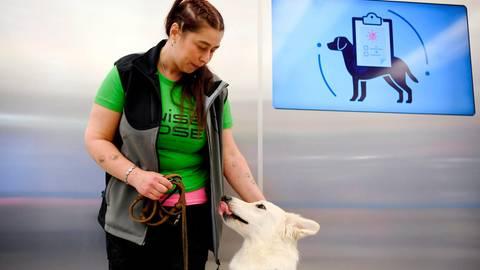Feldversuch am Flughafen Helsinki: Schnelltests am Airport: Wie Corona-Spürhunde infizierte Passagiere erkennen können
