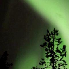 Vor einem grünlich wabernden Nachthimmel zeichnet sich die Spitze einer Kiefer ab