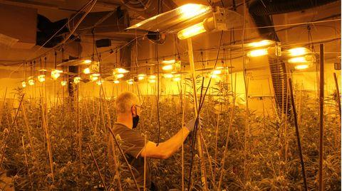 Nachrichten aus Deutschland – Cannabis-Plantage in Höveldorf, Landkreis Paderborn