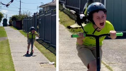 Zehnjähriger wird von aggressiver Elster attackiert – und lernt etwas fürs Leben