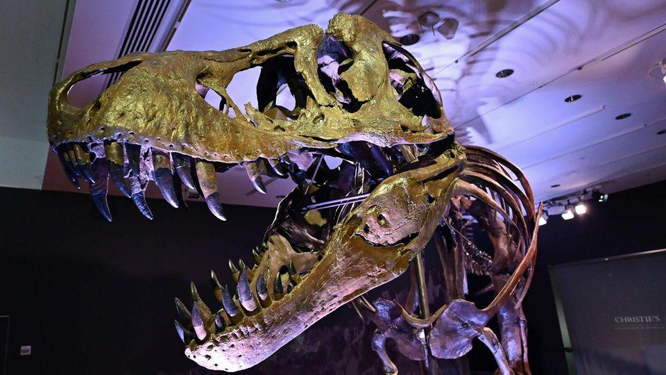 """T-Rex-Skelett """"Stan"""" für Rekordpreis versteigert"""