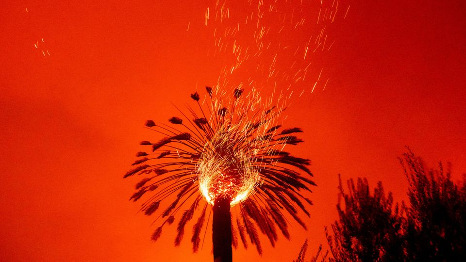 Funken fliegen bei einem Buschfeuer, dem Glass-Feuer, aus einer brennenden Palme