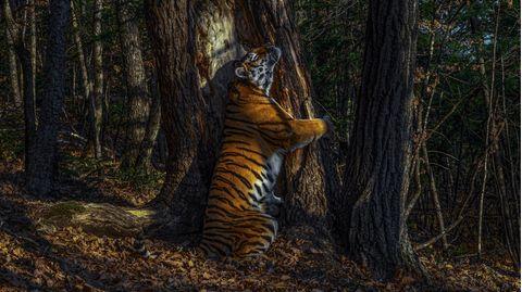 Sergej Gorschkow wird Wildlife Photographer 2020