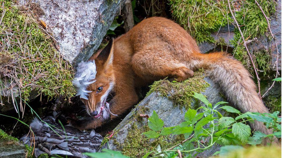 Young Wildlife Photographer 2020 – Liina Heikkinen