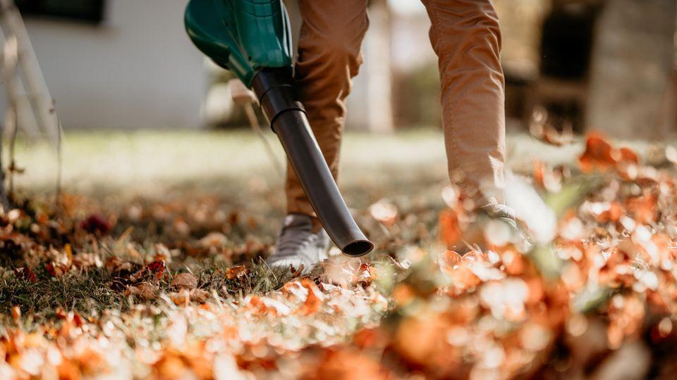 Ökobilanz : Wie ist besser gegen die Blätterberge – Laubbläser oder Rechen?