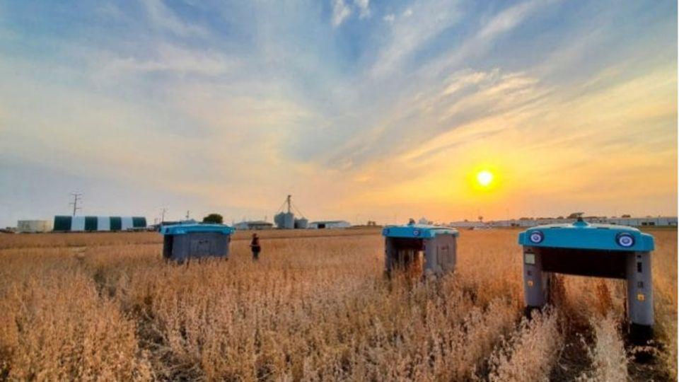 Die Google-Roboter streifen durch ein Weizenfeld.
