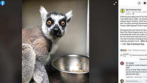 San Francisco: Fünfjähriger entdeckt gestohlenen Lemur – dafür darf er sein Leben lang kostenlos in den Zoo