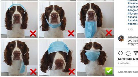 Viraler Post: Wenn dieser Hund eine Maske richtig tragen kann, können Sie das auch