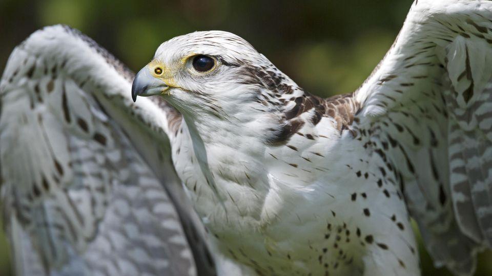 Biologische Vielfalt in Europa geht weiter zurück