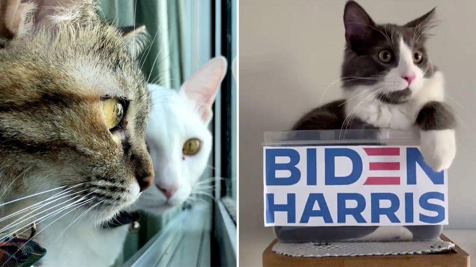 """Demo-cats"" – Joe Biden postet Katzenvideo im Wahlkampf"