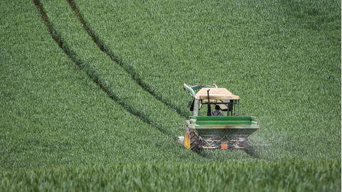 Mit dem Düngerstreuer am Traktor fährt ein Landwirt im Main-Kinzig-Kreis über ein noch grünes Getreidefeld