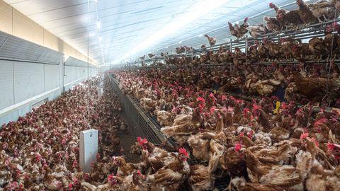 Ein Hühnerstall als Symbolfoto für Nachrichten aus Deutschland