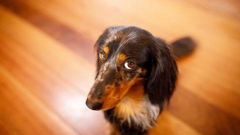 Rätsel der Tierwelt: Warum der Hund den Hundeblick aufsetzt - und weshalb queere Tierpaare wichtig sind