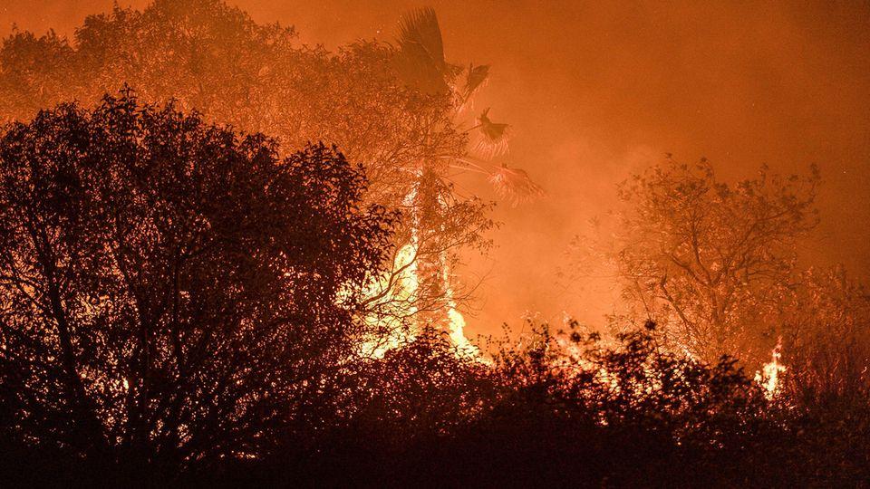Waldbrände in der Nähe der StadtLake Forest im US-Bundesstaat Kalifornien