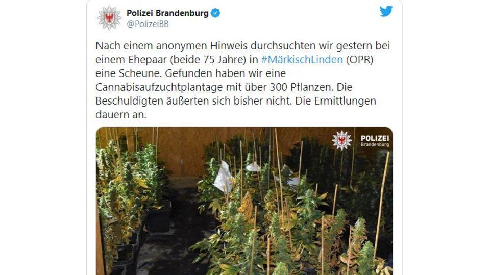 Ein Bild zeigt eine Cannabisplantage