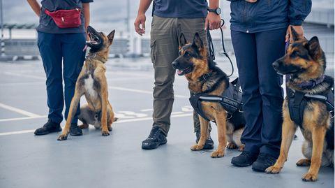 """News zum Coronavirus: Finnland setzt Spürhund als """"Corona-Tester"""" ein"""