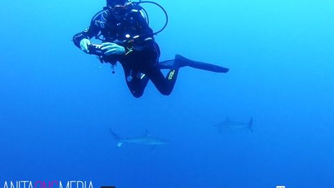 Das seltene Spektakel filmten die tauchenden Freunde, während Anita einige Meter tiefer komplett von Haien umgeben war