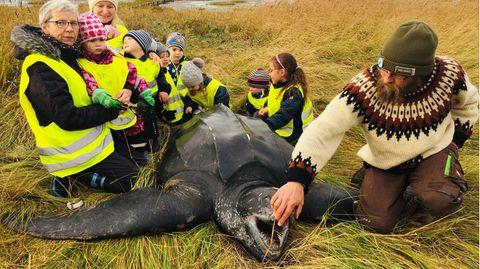 Kinder einer Kindergartengruppe bestaunen eine riesige Schildkröte