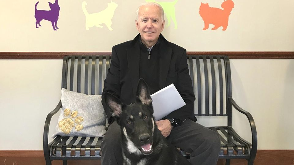 Auf einer Bank unter dem Logo eines Tierschutzvereins sitzt Joe Biden und hat einen Schäferhund vor sich sitzen
