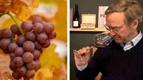 Weinexpertin macht den Test: Kann ein Wein aus Übersee für 2,49 Euro wirklich schmecken?