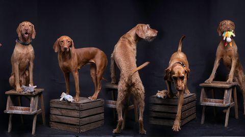 Sieben Hunde auf jeweils einer Weinkiste