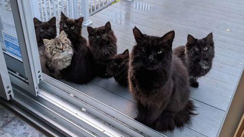 Die schwarze Katzenmutter mit ihren sechs Kätzchen auf der Terrasse