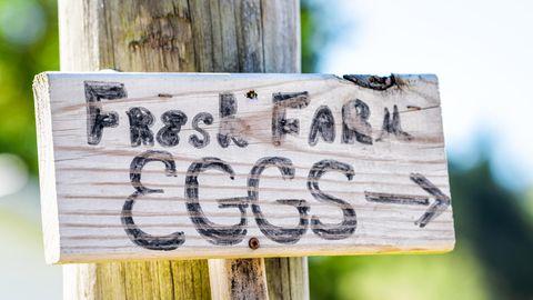 Schild eier